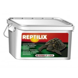 Reptilix Tortues
