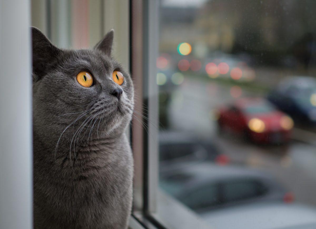 Non aux idées reçues sur les chats !