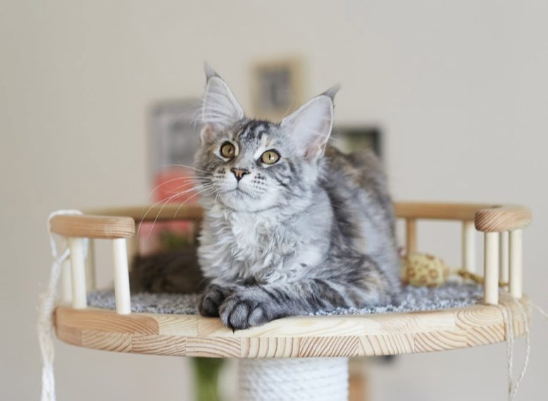 Les causes du stress chez le chat
